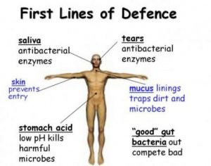 First line of defense immune system