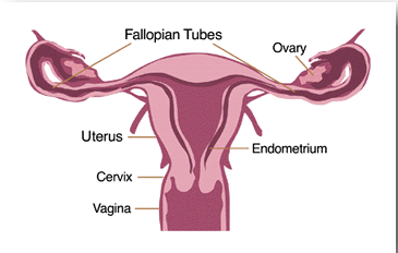 Causes Female Infertility