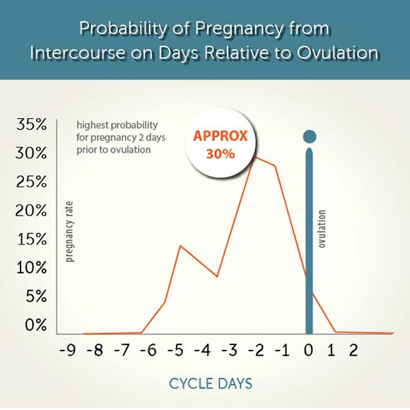 probability of pregnancy from intercourse on days relative to ovulation