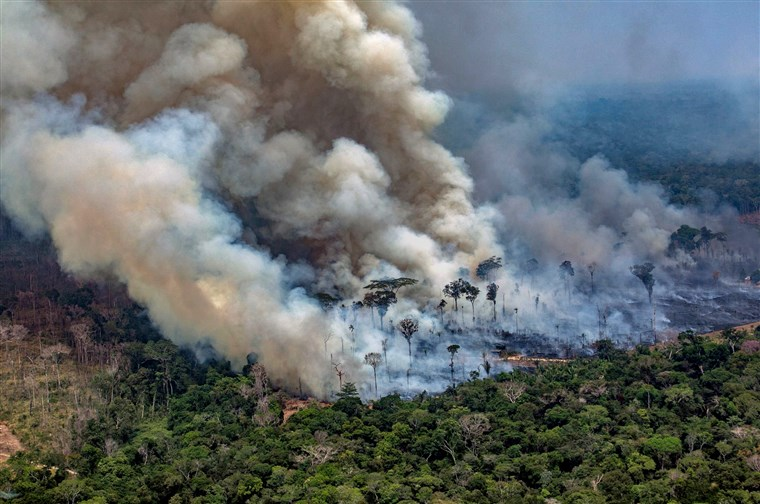 amazon rainforest fires