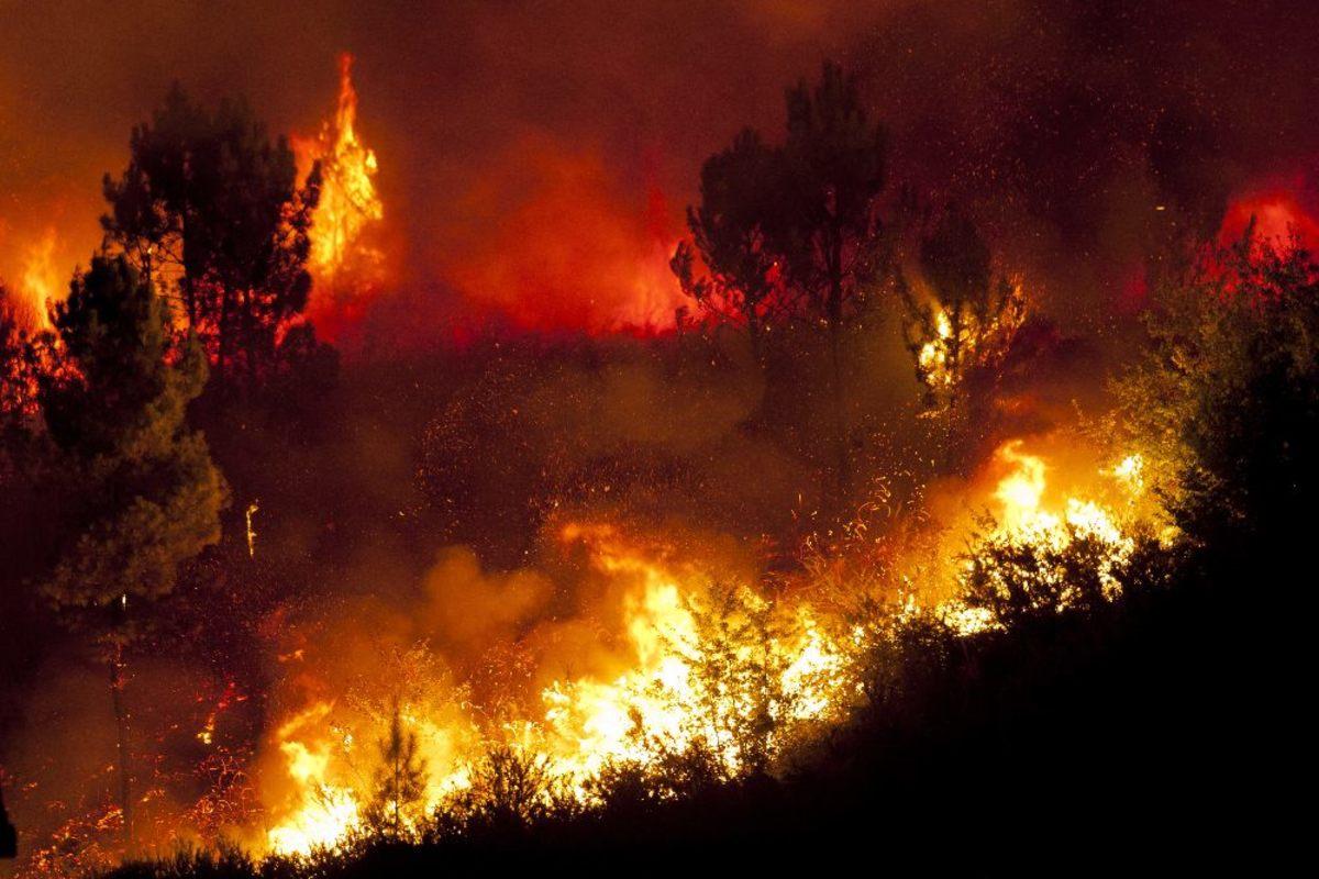 amazon rainforests fire