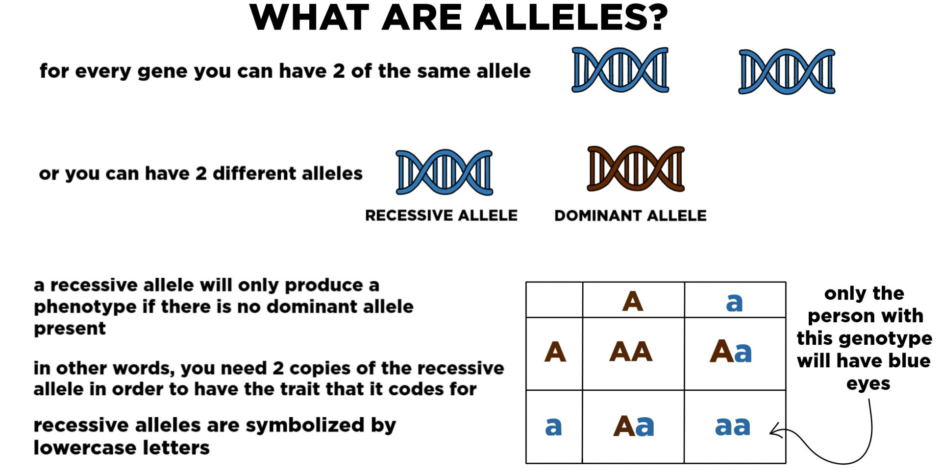What is an allele